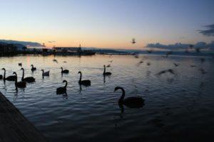 Lake Rotorua at sunset, New Zealand